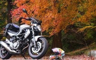 秋叶盛开,与日本摩友一起去看枫叶吧!